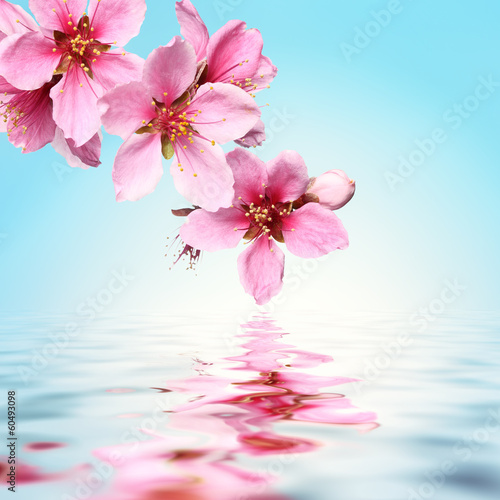 Fotobehang Orchidee Peach flower,water background