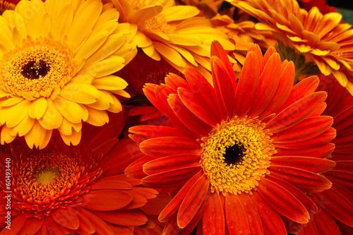 Papiers peints Gerbera A bouquet of roses.