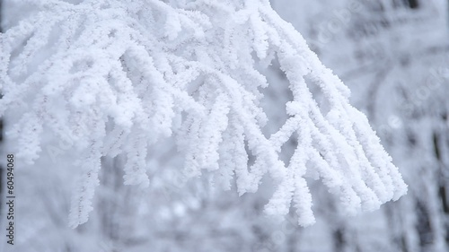 Frozen tree branch in the forest