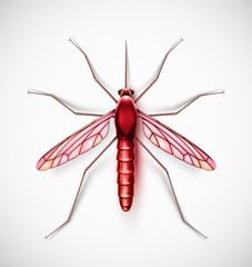One isolated mosquito, eps 10