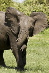 Spielender Elefantenrüssel