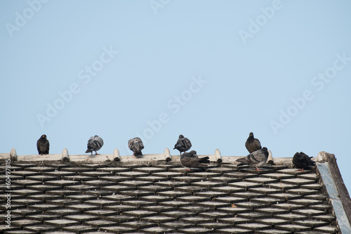 The pigeon stand on the finial of temple.