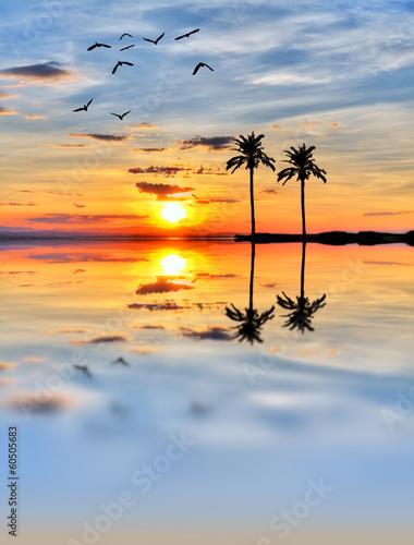Fotobehang Een Hoekje om te Dromen palmeras en una isla