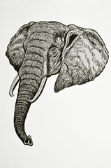ritratto di testa di elefante