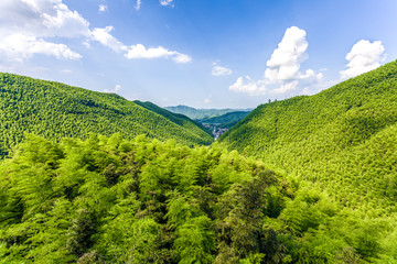 bamboo forest in south china