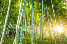 forêt de bambou avec la lumière du soleil