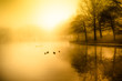 Fog and golden morning light over duck pond