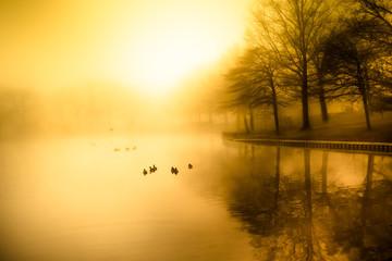 Fog and golden morning light over duck pond