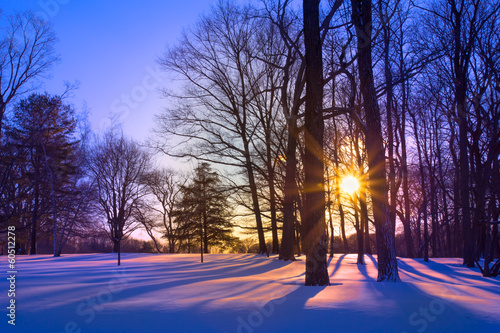 Sunset through trees on snowy landscape - 60512278