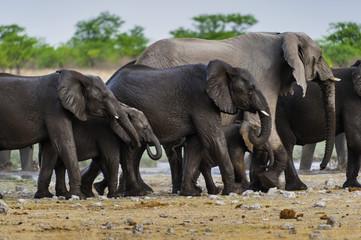 Elefanten am Rietfontein Wasserloch, Etosha , Namibia