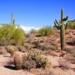 Arizona desert view with giant saguaro cactus