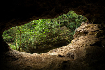 Green trees view from the inside of the cave
