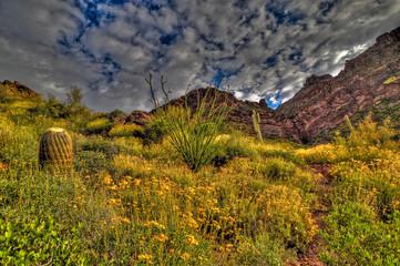 AZ-Western Superstition Mountain Wilderness