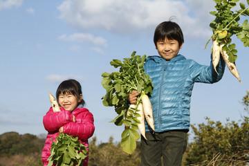 野菜を収穫する子供