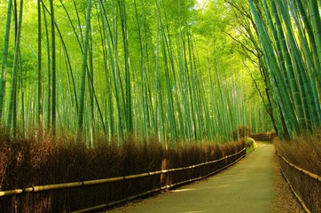 LANE into the bamboo forest 竹林の小路 © shuttered