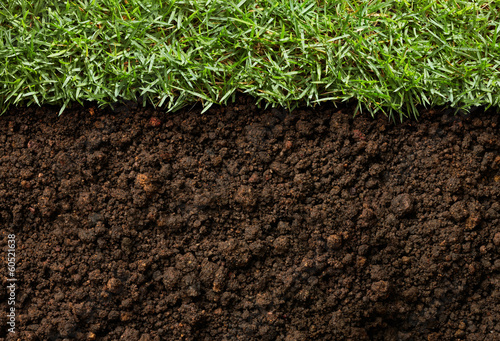 grass and dirt