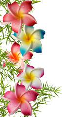 fleurs synthétiques de frangipanier sur bambou