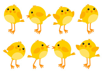 Set of cute little chickens