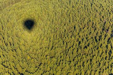 Luftbild - Ballon überm Wald