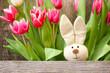 Hase und Tulpen