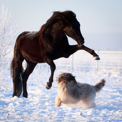Black stallion and dog