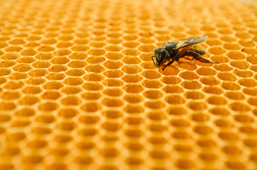 Bees honey cells