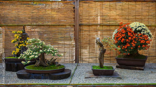 Japanese small bonsai tree in a garden