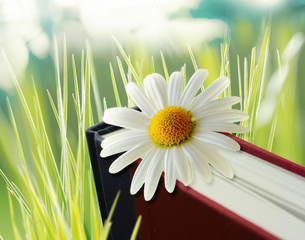 daisy flower on book