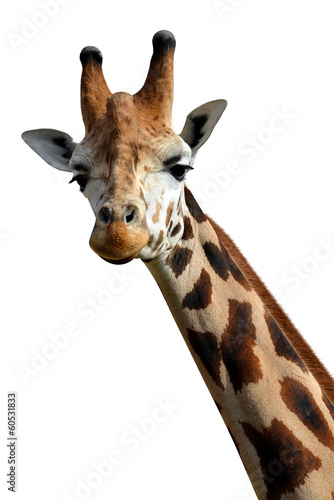Staande foto Afrika giraffe isolated on white background