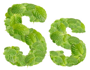 S letter leaves of mint, menthol, isolated on white