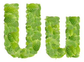 U letter leaves of mint, menthol, isolated on white