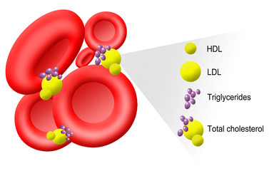 Illustration of cholesterol molecules in blood