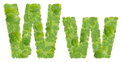 W letter leaves of mint, menthol, isolated on white