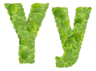 Y letter leaves of mint, menthol, isolated on white