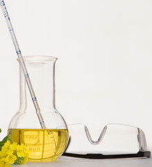 Canola or rapeseed oil in laboratory beaker