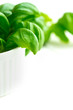 Fresh green basil in a white bowl with copy space