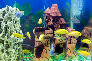 Tropical fish in an aquarium