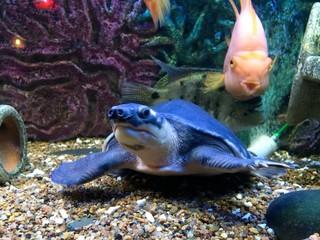 sea aquarium with turtle