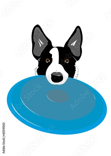 Disc Dog - Border Collie