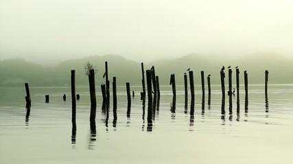 Vögel auf einem See