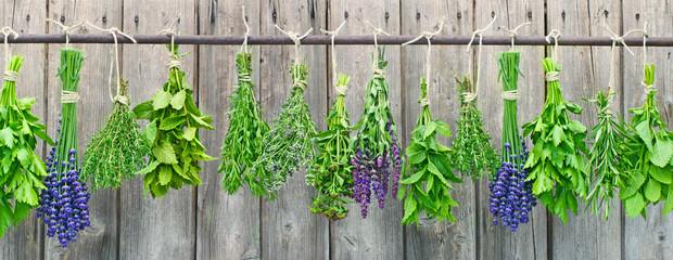Wiszące zioła do kuchni restauracji