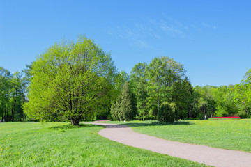 Path and trees in park in the spring