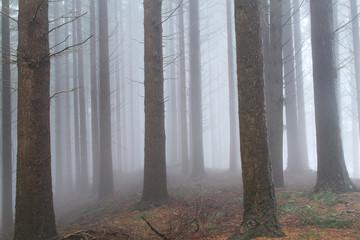 pistoia riserva naturale di acquerino in autunno
