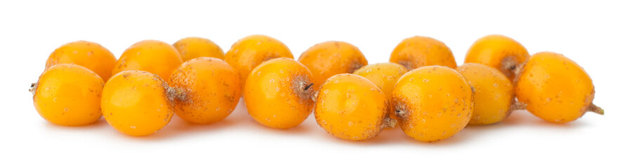 sea buckthorn isolated on the white background