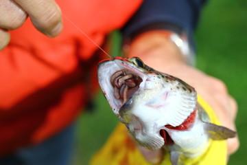 Fish caught Fish bait