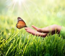 """Постер, картина, фотообои """"butterfly in hand on grass"""""""