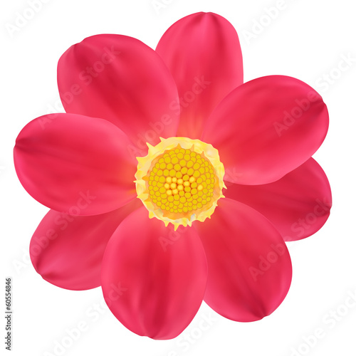 Red Dahlia Flower. Vector illustration