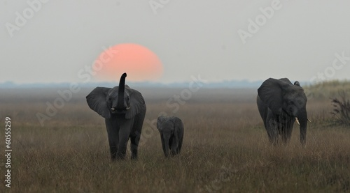 Plexiglas Olifant The family of elephants