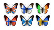 butterflies with wings countries flags