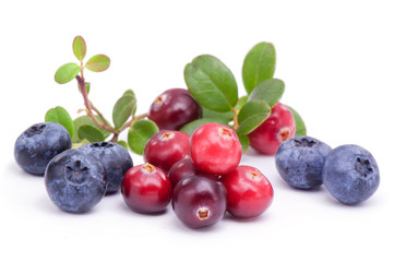 Blueberry and cowberry with green leaves